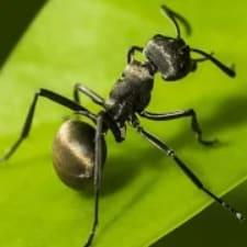 The Ants: Underground Kingdom на Android